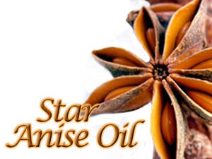 Wholesale toothpaste: Star Anise Essential Oil From Vietnam