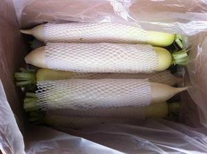 Wholesale Fresh Radish: Offer Fresh Radish