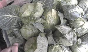 Wholesale fresh cabbage: Fresh Cabbage