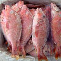 Wholesale seafood crab legs: Fresh and Frozen Red Snapper Fish
