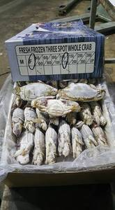 Wholesale frozen whole crab: Frozen Blue Swimming Crab,Seafood Crab Legs, King Crab, Frozen Whole Crab