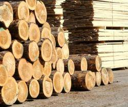 Sell pine logs