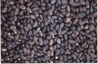 Wholesale jatropha oil: Jatropha Seeds
