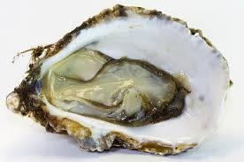 Wholesale frozen oyster: Frozen Oyster