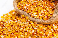 Sell Yellow maize india/Best Quality Yellow maize from India