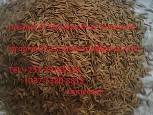 Wholesale drugs: Strophanthus Gratus