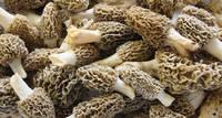 Morel Mushrooms, Dried Morel Mushrooms for Sale, Dried Morels, Fresh Morel Mushrooms, Spring Morel