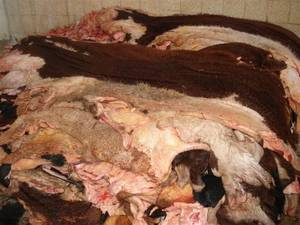 Wholesale skin: Wet Salted Cow Hides, Sheep Hides, Goat Skin ,Donkey Hides