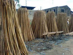 Wholesale Bamboo, Rattan & Wicker Furniture: Rattan Canes
