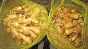 Wholesale dried onion: Fresh Ginger / Fresh Garlic / Fresh Onions / Green Cardamon