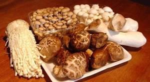 Wholesale fresh mushroom: Mushrooms / Truffles / Spores