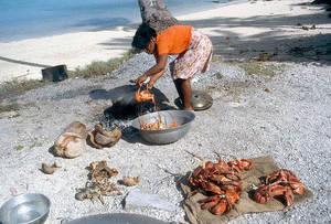 Wholesale Fish & Seafood: Live Coconut Crab /  Live Mud Crabs / Live King Crab