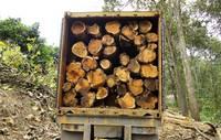 timber /Logs / Sawn Wood
