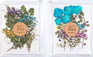 Wholesale Pressed Powder: Pressed Flowers