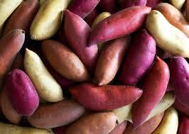 Wholesale Fresh Sweet Potatoes: Fresh Sweet Potato / Sweet Potatoes