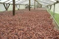 Wholesale cocoa liquor: Cocoa ,Cocoa Beans , Cocoa Powder ,Cocoa Liquor