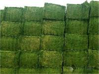 Wholesale mid: Top Quality Alfafa Hay, for Animal Feeding