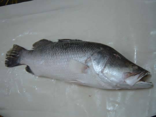 Tilapia fillet: Sell  Hot Sale Frozen W/R Sea Bass