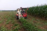 Sell peanut combine harvesterTY