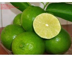 Wholesale sale: Fresh Lime for Sale