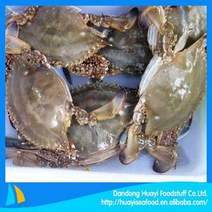 Wholesale frozen blue swimming crab: Frozen Blue Swimming Crab