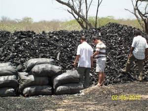 Wholesale charcoal: Mangrove Charcoal,Hard Wood,Lemon Charcoal,Citrus Charcoal