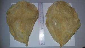 Wholesale Other Fish & Seafood: Fish Maw