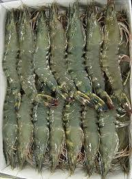 frozen seafood: Sell  seafood frozen wild rock shrimp