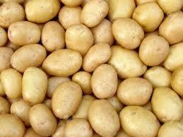 fresh chestnut: Sell Fresh Potatoes