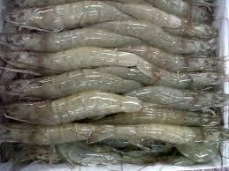Wholesale Shrimp: Frozen Vanamei Shrimp