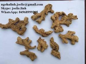Wholesale Fresh Ginger: Fresh Ginger, Dried Ginger +84968999205