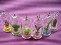 Tiny Mini Plant