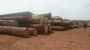 Wholesale Timber: Sell African Hard Woods Logs Bubinga and Many Other