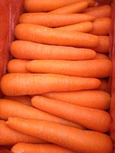 Wholesale fresh carrot: High Quality Fresh Carrot