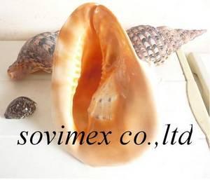 Wholesale jewelry: Sea Shell