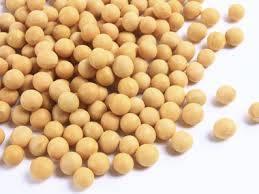 Wholesale lighting: Dry Pinto Beans or Light Speckled Kidney Beans(Long Shape) Size 220-240 PCS