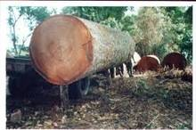 Wholesale round: Timber Log / Sawlogs / Wood Round Logs / LARCH/BIRCH/SPRUCE/PINE READY for EXPORT