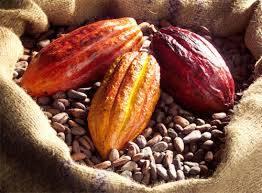 Wholesale liquor: Cocoa ,Cocoa Beans , Cocoa Powder ,Cocoa Liquor