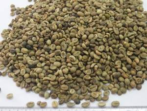 Wholesale i: Green Beans Robusta Coffee Grade I/Grade Ii