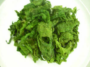Wholesale seaweed: Ulva Lactuca (Green Seaweed)