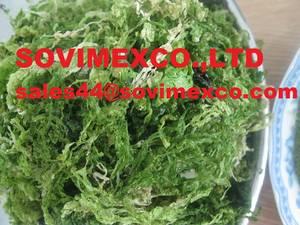 Wholesale dried seaweed: Ulva Lactuca