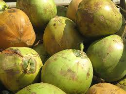 Wholesale coconut: Fresh Coconut with Competitive Price