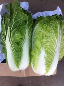 Wholesale fresh cabbage: Fresh Chinese Cabbage