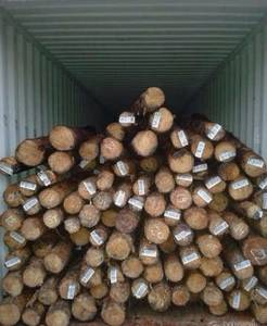 Wholesale Timber: Pine & Hard Wood Logs and Timber