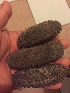 Wholesale dried: Dried Sea Cucumber
