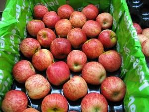 Wholesale health: Fresh Royal Gala, Fuji, Golden Delicious, Red Delicious Apples