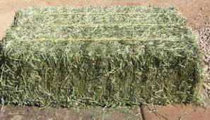 top quality: Sell Top Quality Alfafa Hay For Animal feeding stuff Alfalfa / alfalfa hay