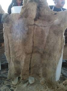 Wholesale pickles: Wet Salted Donkey Hides,Cow Skins and Pickled Sheep Skins,