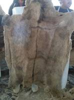 Wet Salted Donkey Hides,Cow Skins and Pickled Sheep Skins,