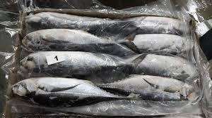 Wholesale Fish & Seafood: Frozen Horse Mackerel Fish